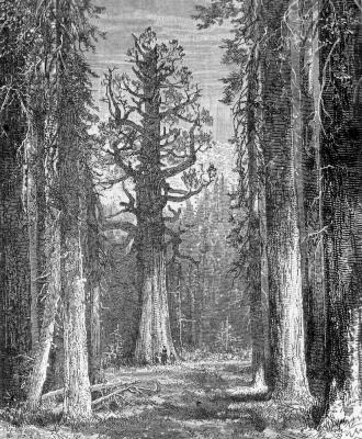 john muir forestry sierra club essay The influence of john muir on the kind of world we have today, where almost everything is industrialized and business is the main concern of the people, it is.