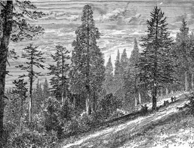 The Forests Chapter 8 The Mountains Of California By