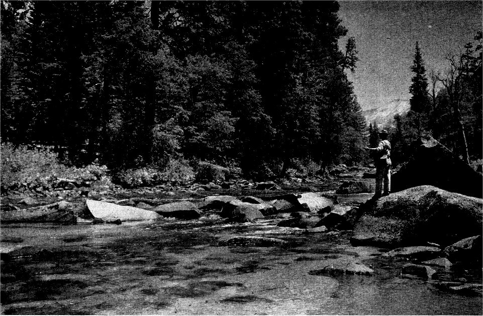 Fishes of yosemite national park 1941 1948 notes of for Fishing in yosemite