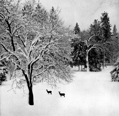 The Four Seasons In Yosemite National Park 1938