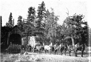 Wawona Covered Bridge with freight wagon and mule team