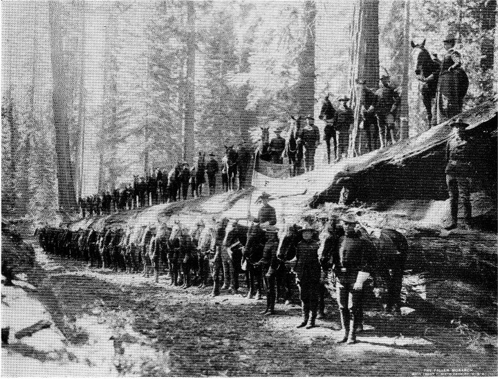 Mariposa Grove Of Giant Sequoias Guide And Map Yosemite National Park